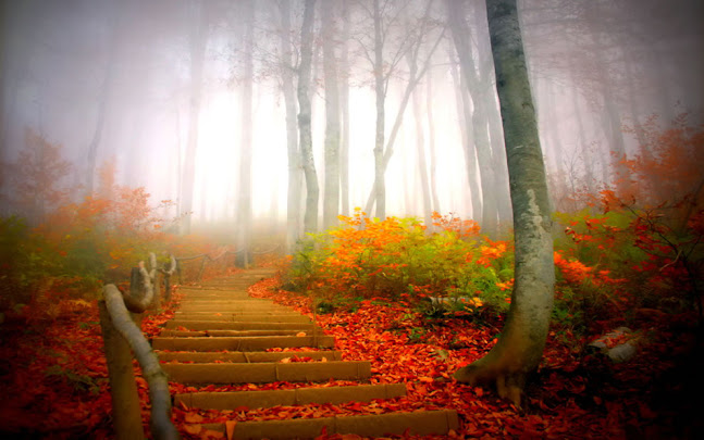 Path through foggy forest fall picture
