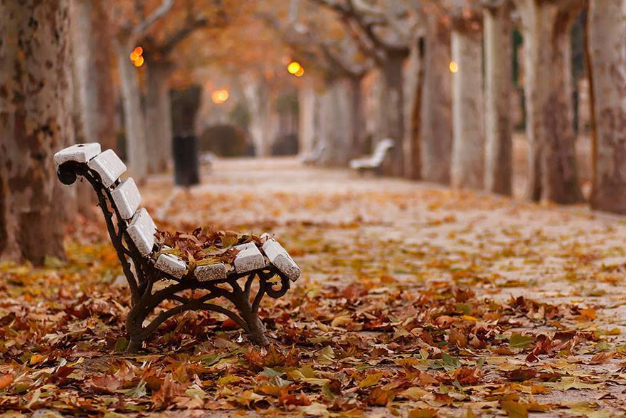 Wooden park bench covered with fallen leaves October